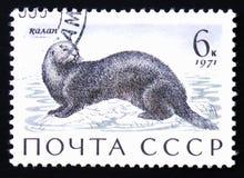 Enhydra lutris della lontra di mare, circa stampato in URSS, circa 1971 Fotografia Stock Libera da Diritti