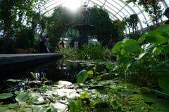 Enid A Haupt konserwatorium 21 Zdjęcie Royalty Free