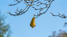 Enig blad op een boomtak in de herfst Stock Foto's