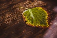 Enig blad op water dichte omhooggaand De herfst Houten achtergrond royalty-vrije stock foto