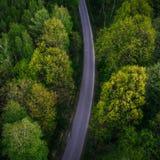 Enig de trog wild bos van de steegweg Stock Foto's
