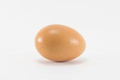 Enig Ei op Witte Achtergrond Royalty-vrije Stock Afbeelding
