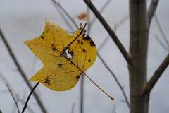 Enig geel die blad door een takje in de lucht wordt gevangen Royalty-vrije Stock Foto's