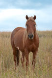 Paard in Lang Gras Royalty-vrije Stock Afbeelding