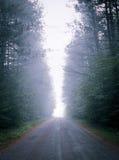 Enig puntperspectief onderaan verduisterde mist, bos-gevoerde weg Stock Fotografie