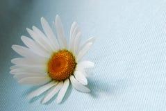 Enige bloem Stock Foto