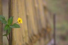 Enige bloem in de tuin Royalty-vrije Stock Fotografie
