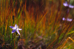 Enige bloem en het gras Royalty-vrije Stock Fotografie