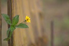 Enige bloem in het park Stock Fotografie