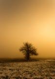 Enige boom in de mist Royalty-vrije Stock Fotografie