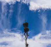 Enige boom die zich op de hemel bevinden Stock Foto