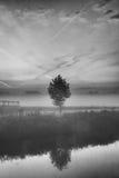 Enige boom door de waterkant Royalty-vrije Stock Fotografie