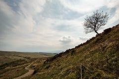 Enige boom en weg Stock Foto