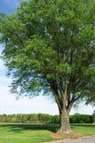 Enige boom in het park royalty-vrije stock foto's