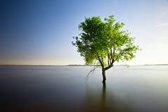 Enige boom in meer Stock Foto's