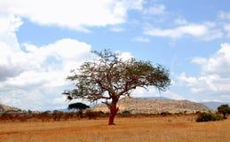Enige boom met bewolkte hemel in Afrika Royalty-vrije Stock Foto's