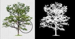 Enige boom met het knippen van weg royalty-vrije stock afbeelding