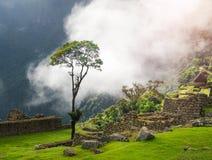 Enige boom op de achtergrond van de steenruïnes van Machu Picchu in Peru royalty-vrije stock foto