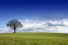 Enige boom op een gebied Stock Afbeeldingen