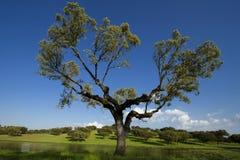Enige boom op het gebied royalty-vrije stock afbeelding