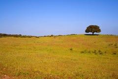 Enige boom op het gebied royalty-vrije stock afbeeldingen