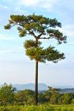 Enige boom op het gebied, mooi natuurlijk de zomerlandschap, pi Stock Afbeeldingen