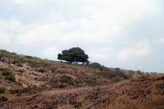 Enige boom op heuvel Royalty-vrije Stock Afbeeldingen