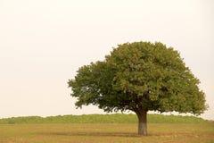 Enige boom in platteland Royalty-vrije Stock Fotografie