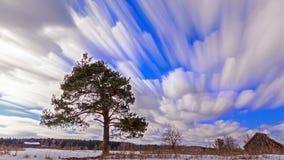 Enige boom tegen de hemel onscherp Geschoten op Canon 5D Mark II met Eerste l-Lenzen stock footage