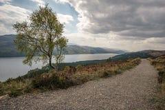 Enige boom voor Loch Ness Stock Foto's
