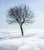 Enige boom in vorst Royalty-vrije Stock Afbeeldingen