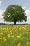 Enige boom in weide bij de lente Royalty-vrije Stock Foto's