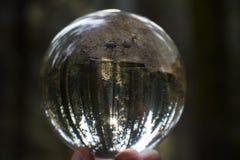 Enige Boom in Zonlicht in Reuzecalifornische sequoia Forest Captured in Glas stock afbeelding
