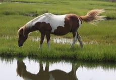 Enige bruine en witte poney Stock Fotografie