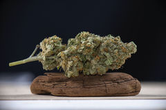 Enige de marihuanaspanning van de cannabisknop mangolope op donkere backgro Royalty-vrije Stock Fotografie