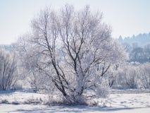 Enige die boom in vorst en sneeuw II wordt behandeld royalty-vrije stock afbeeldingen
