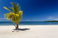 Enige die palm tegen blauwe Caraïbische Zee bij toevlucht op Roatan, Honduras wordt gesilhouetteerd Royalty-vrije Stock Foto's