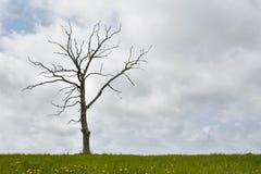 Enige droge boom, bewolkte hemel, gras bij bodem Royalty-vrije Stock Fotografie