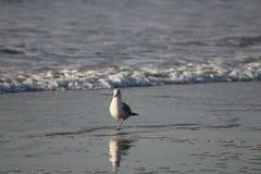 Enige duif alleen op het strand royalty-vrije stock afbeeldingen
