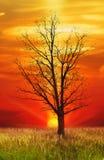 Enige eiken boom Stock Afbeelding