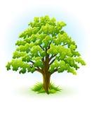Enige eiken boom met groene leafage Royalty-vrije Stock Afbeelding