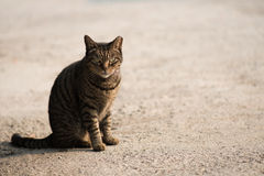 Enige kat in zwarte royalty-vrije stock afbeelding