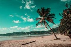 Enige kokosnotenpalm op het strand met zon Stock Foto