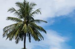 Enige kokospalm Stock Foto