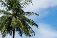 Enige kokospalm Royalty-vrije Stock Afbeelding