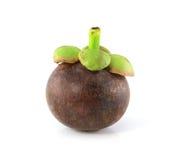 Enige mangostan Stock Foto