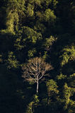 Enige onvruchtbare boom in Vang Vieng, Laos Stock Fotografie