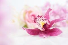 Enige orchideebloem op bloemenachtergrond Royalty-vrije Stock Foto