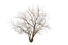 Enige oude en dode boom Stock Foto's