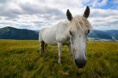 Enige paard dichte omhooggaand Stock Fotografie